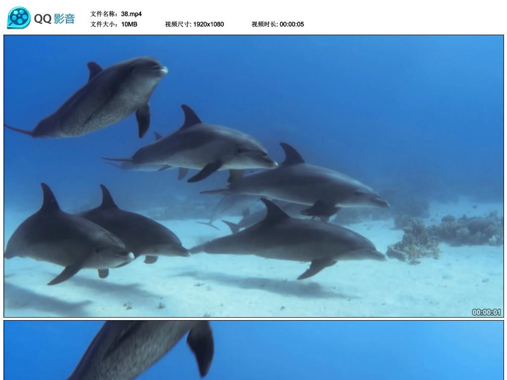 成群海豚海底游动自然风光海洋动物视频