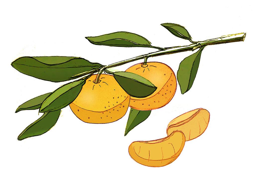 橘子创意手绘