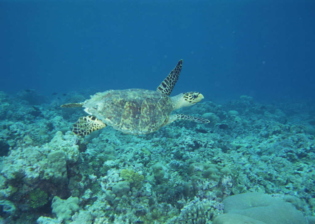 海洋生物深海动物海鱼水产水底风景