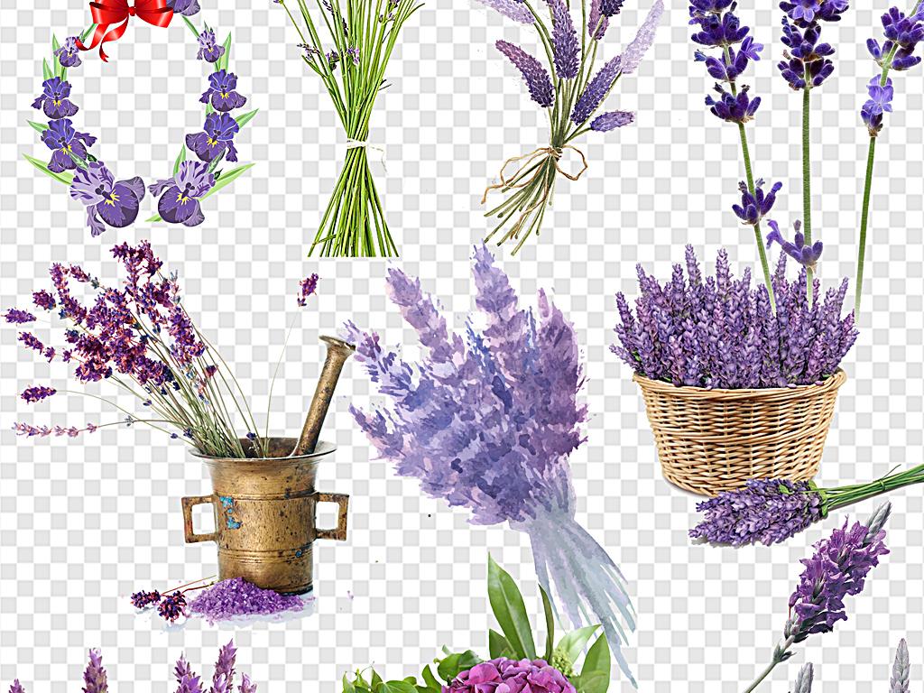 手绘薰衣草薰衣草边框紫色薰衣草薰衣草花篮
