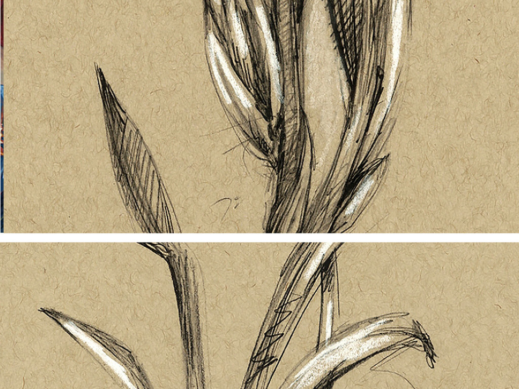 装饰画 其他装饰画 其他 > 黑白兰花植物图谱
