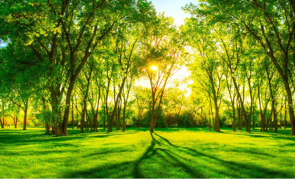 绿色风景树林