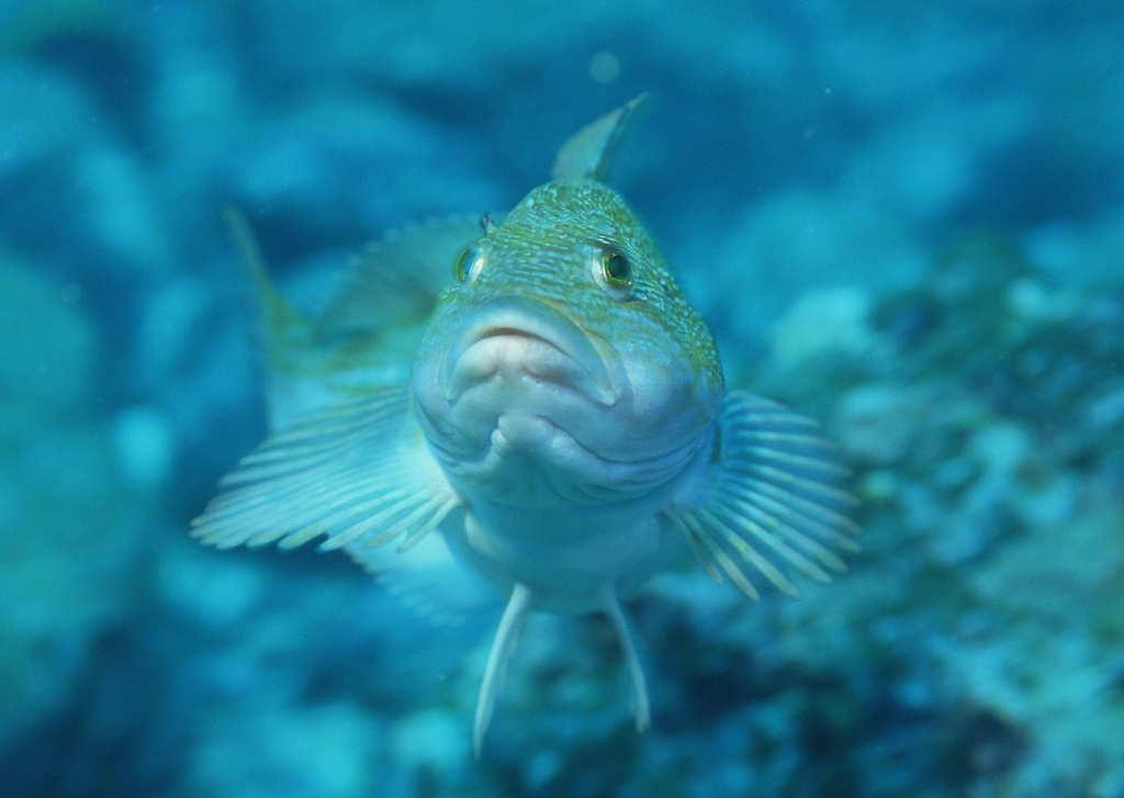 """【本作品下载内容为:""""海洋生物海鱼海底风景动物海底世界""""模板,其他内容仅为参考,如需印刷成实物请先认真校稿,避免造成不必要的经济损失。】 【声明】未经权利人许可,任何人不得随意使用本网站的原创作品(含预览图),否则将按照我国著作权法的相关规定被要求承担最高达50万元人民币的赔偿责任。"""