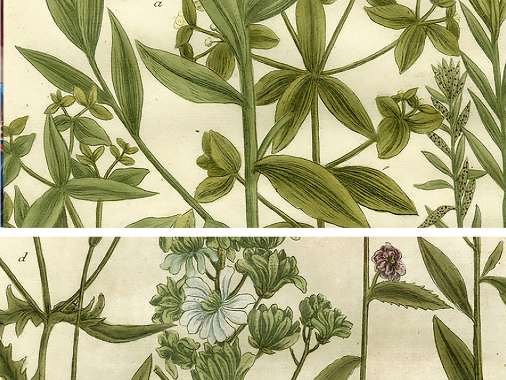 复古植物图谱装饰画