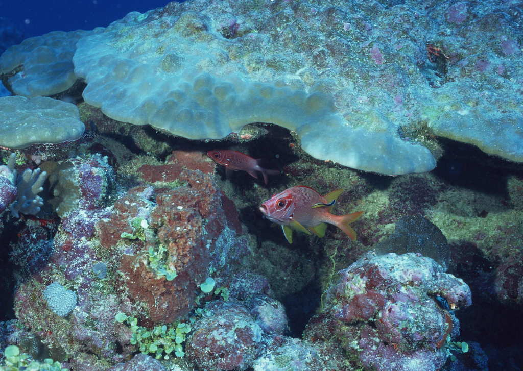 海洋生物海底世界海鱼深海动物海草