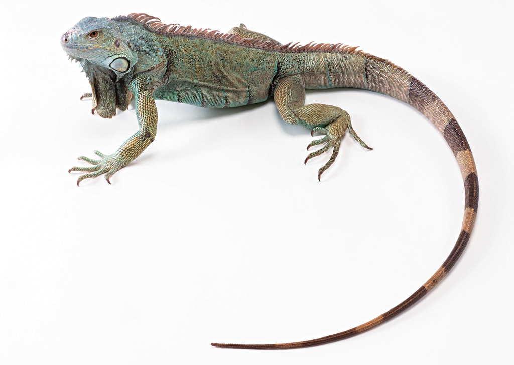 爬行动物世界特写地球生物蜥蜴摄影