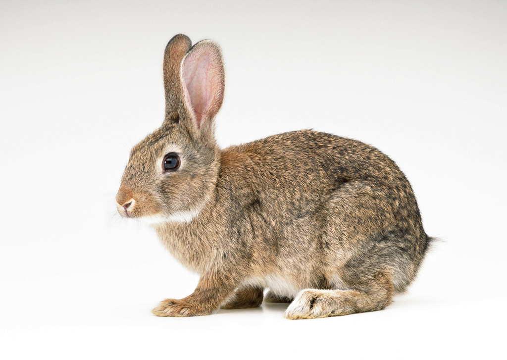 高清动物特写兔子动物世界宠物摄影