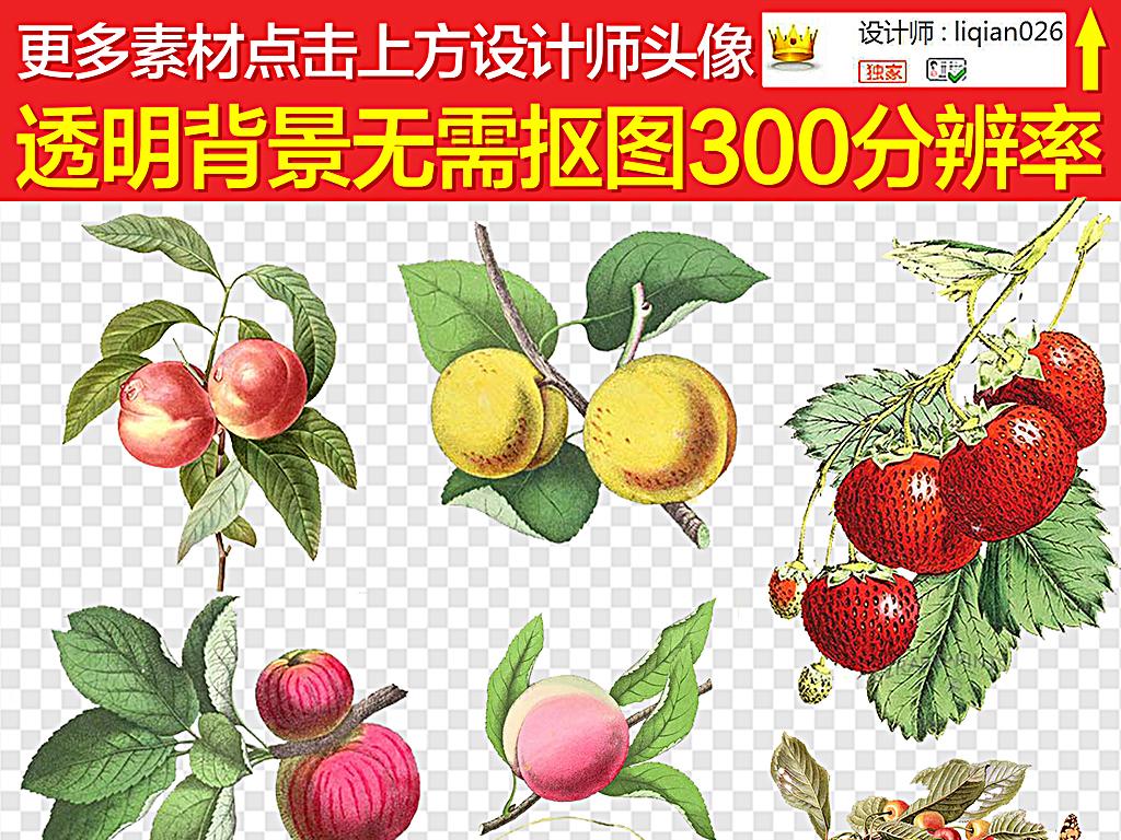 杏子                                          手绘