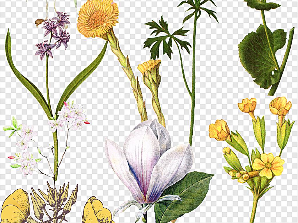 复古花素描花朵彩铅绘画花一朵花鲜花手绘