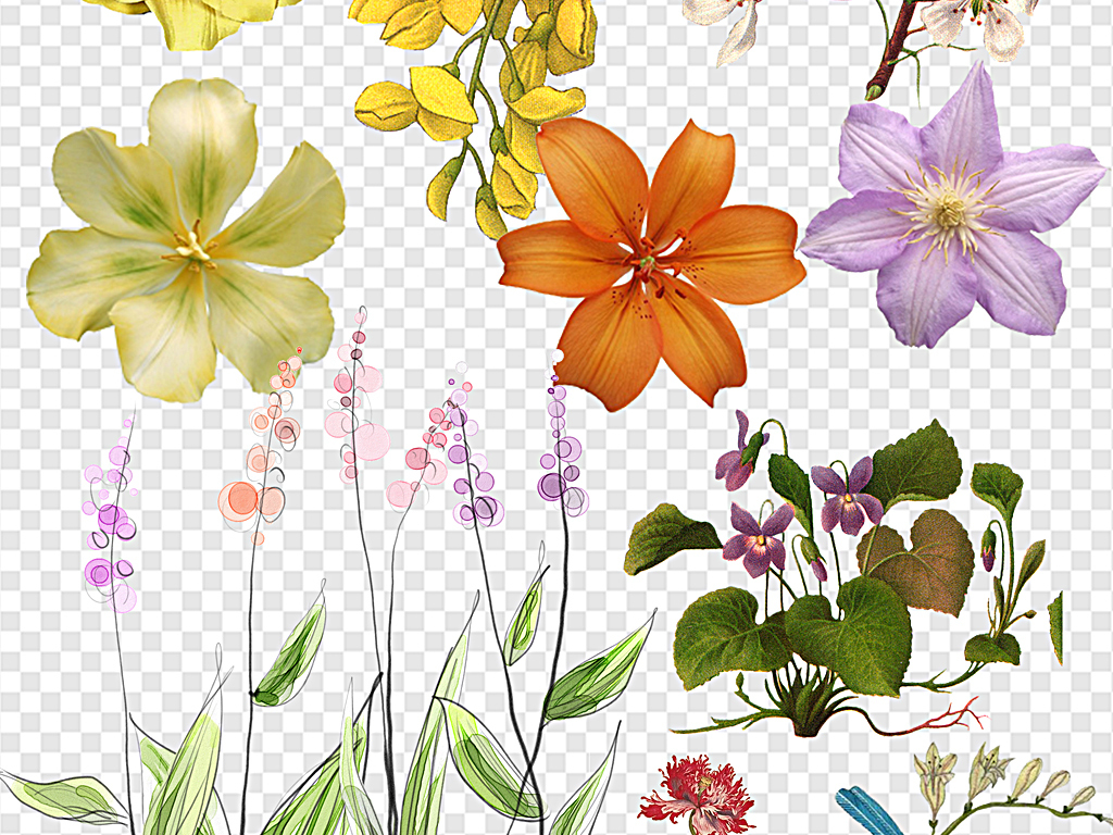 复古花素描花朵彩铅