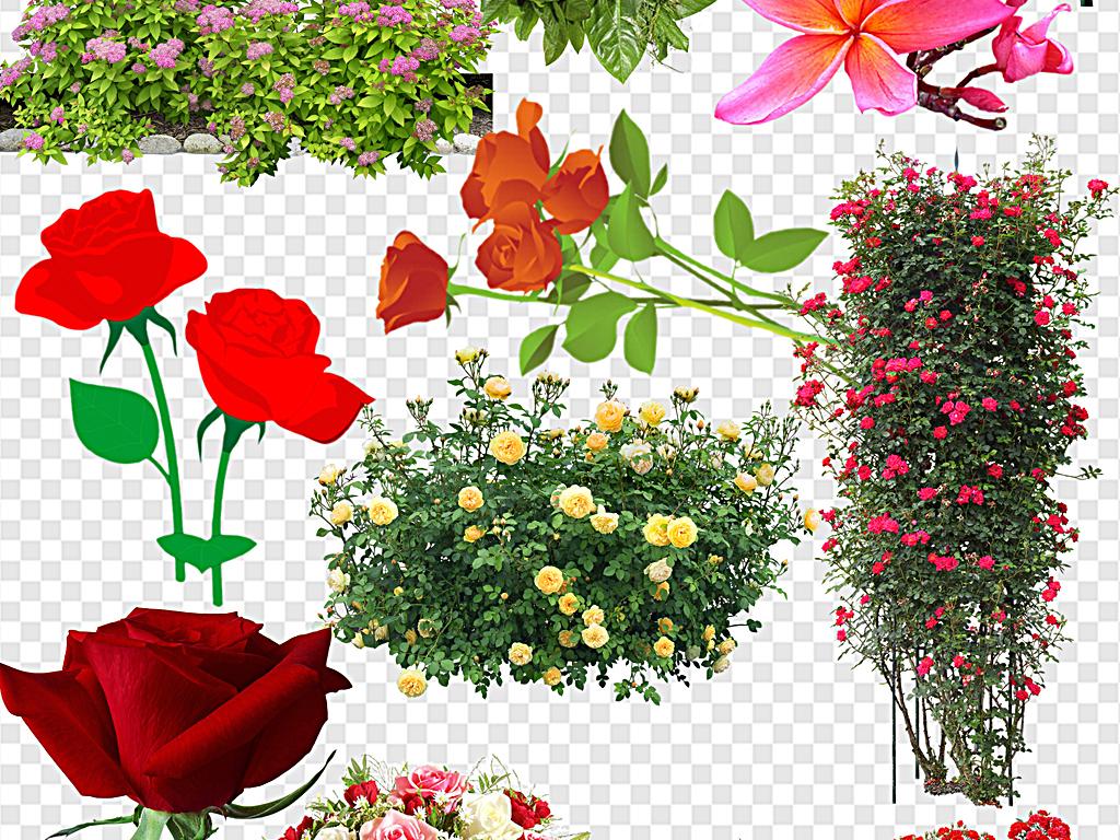 鲜花边框                                  手绘鲜花