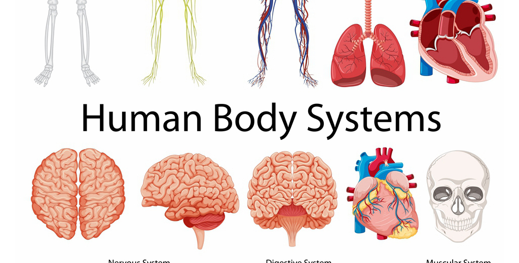 我图网提供精品流行医学人体组织内脏器官解剖结构矢量示意图集素材下载,作品模板源文件可以编辑替换,设计作品简介: 医学人体组织内脏器官解剖结构矢量示意图集 矢量图, CMYK格式高清大图,使用软件为 Illustrator CS6(.ai) 内脏 人体组织 解剖图 人体结构 内脏器官 肝脏 小肠 大肠 肾脏 肺 膀胱 动脉 静脉 矢量图 心脏 胃 大脑 脊髓 骨骼 人体骨骼 生殖器 骷髅 神经 肌肉 结构图 AI 医学 健康 卫生 宣传 解剖 人体 人体解剖 示意 组织结构 医学人体解剖 器官 组织