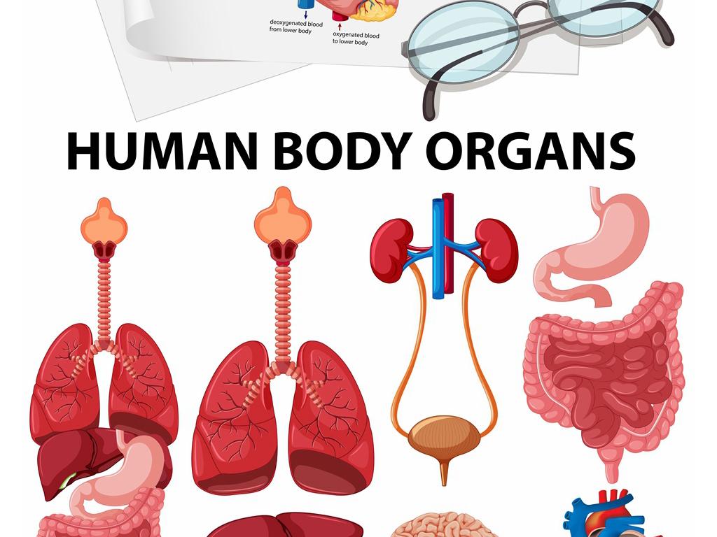 """【本作品下载内容为:""""医学人体组织内脏器官解剖结构矢量示意图集""""模板,其他内容仅为参考,如需印刷成实物请先认真校稿,避免造成不必要的经济损失。】 【声明】未经权利人许可,任何人不得随意使用本网站的原创作品(含预览图),否则将按照我国著作权法的相关规定被要求承担最高达50万元人民币的赔偿责任。所有作品均是用户自行上传分享并拥有版权或使用权,仅供网友学习交流,未经上传用户授权,请勿作他用。"""