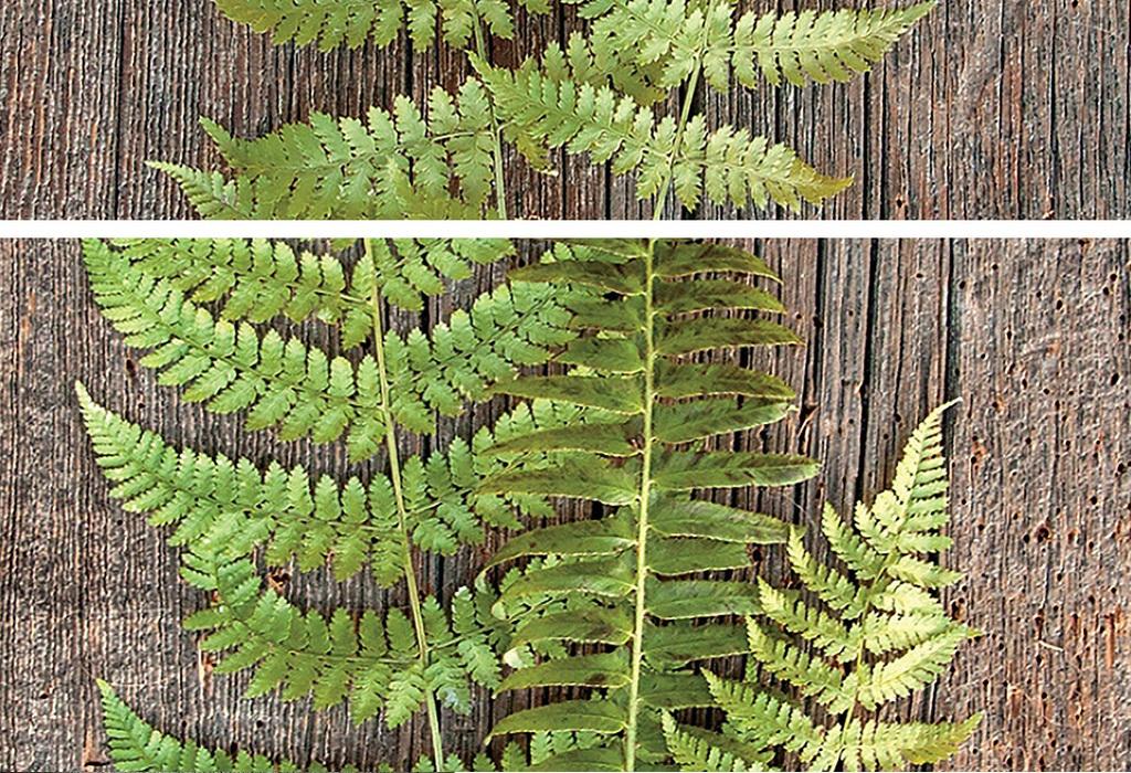 抽象复古模板蕨类植物叶子