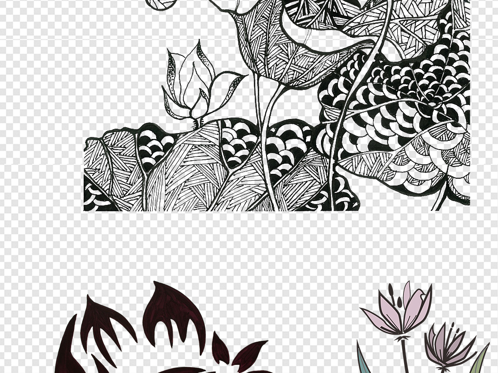 黑白荷花简笔画高清图片图片