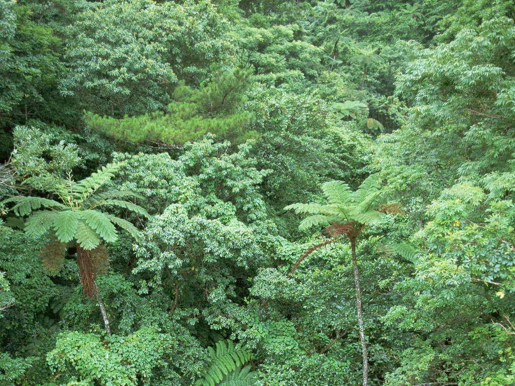 热带树木海岛植物自然生态生物郊野