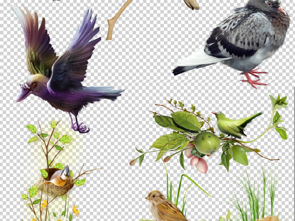 小鸟彩色鸟装饰画素材素材水彩花鸟花鸟手绘手绘水彩