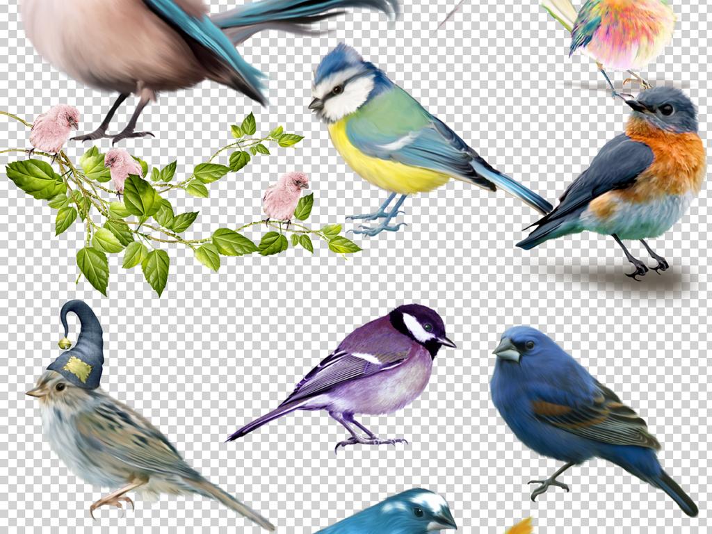 60款水彩手绘鸟类小鸟麻雀png免扣图片素材