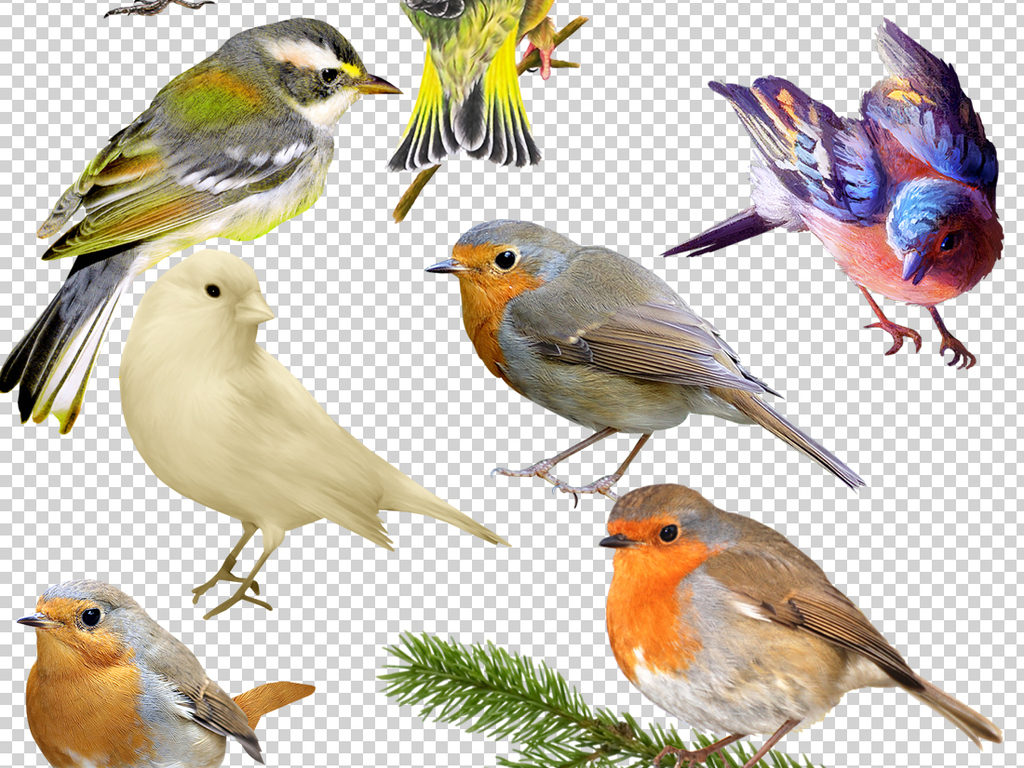 手绘图片素材水彩小鸟百灵鸟黄鹂鸟鸟笼子鸟飞翔飞翔的鸟鸳鸯鸟大鸟网