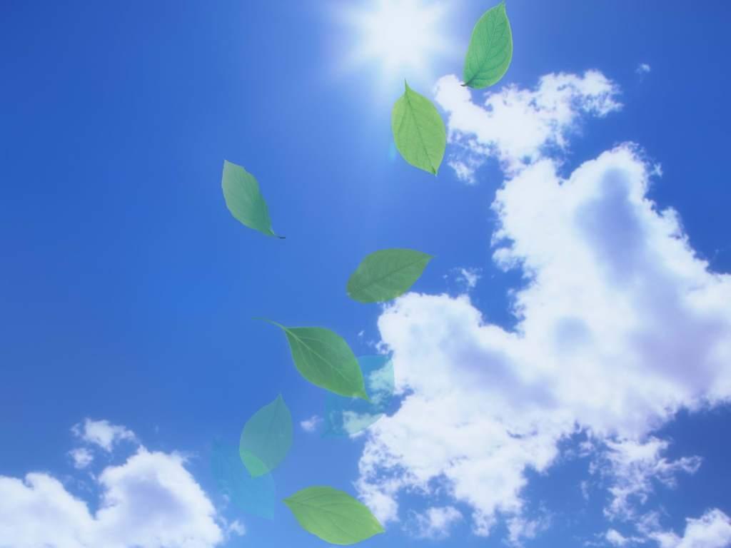 绿色植物阳光蓝天背景绿叶清新背景