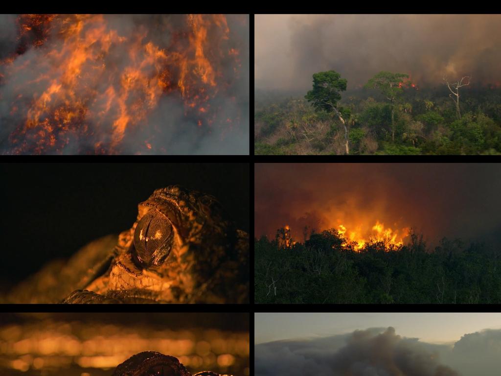 火灾森林着火 16119944 自然世界