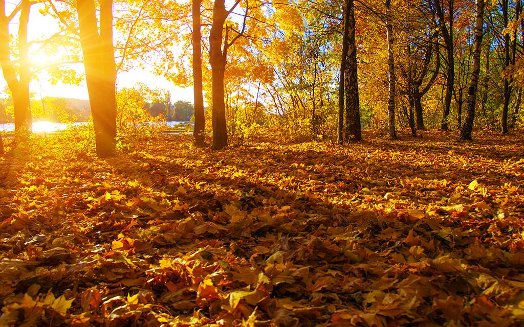 阳光高清图片自然风光自然风景装饰画背景画电视机