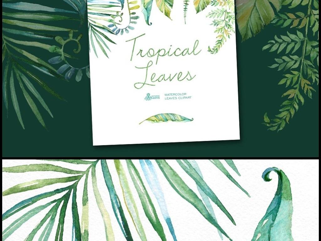 清新手绘水彩热带雨林植物花朵元素