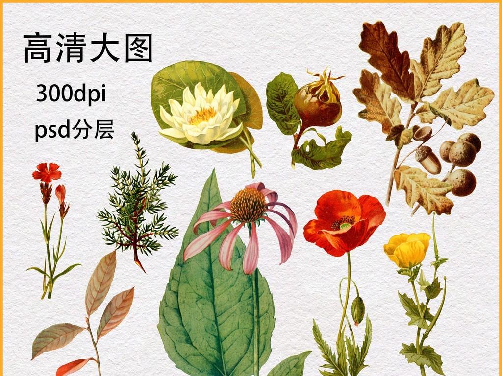 植物花卉手绘复古手绘复古花复古手绘花花复古手绘复古手绘花鸟手绘复
