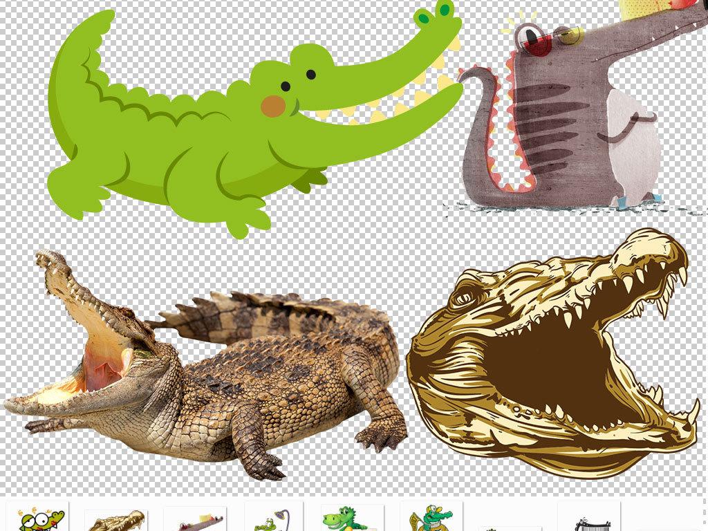 png)                                  鳄鱼图片鳄鱼头像手绘鳄鱼
