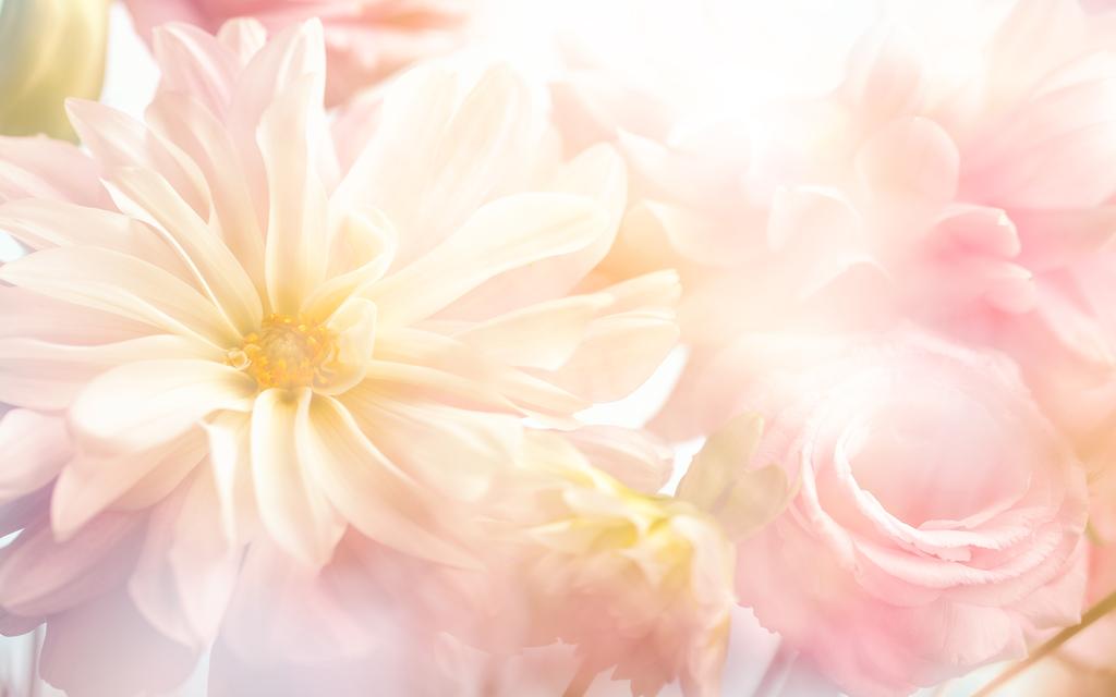 壁纸墙贴花卉装饰线条桃花玫瑰粉色玫瑰小清新茂盛花朵粉色背景高清