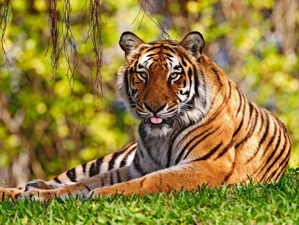 野生动物世界生命珍稀动物素材摄影