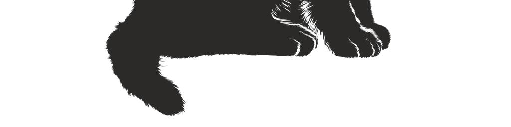 小猫黑猫小黑猫图案卡通图片png