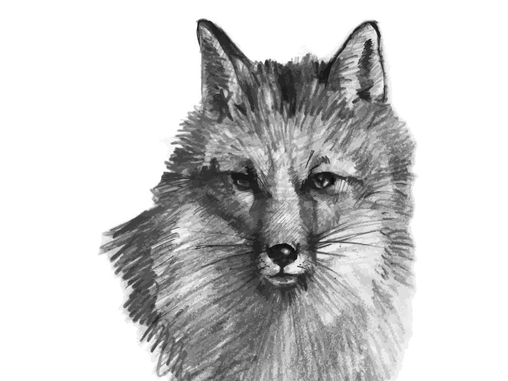 狼头凶猛野兽狼眼睛野狼油画素描狼(图片编号:)_设计