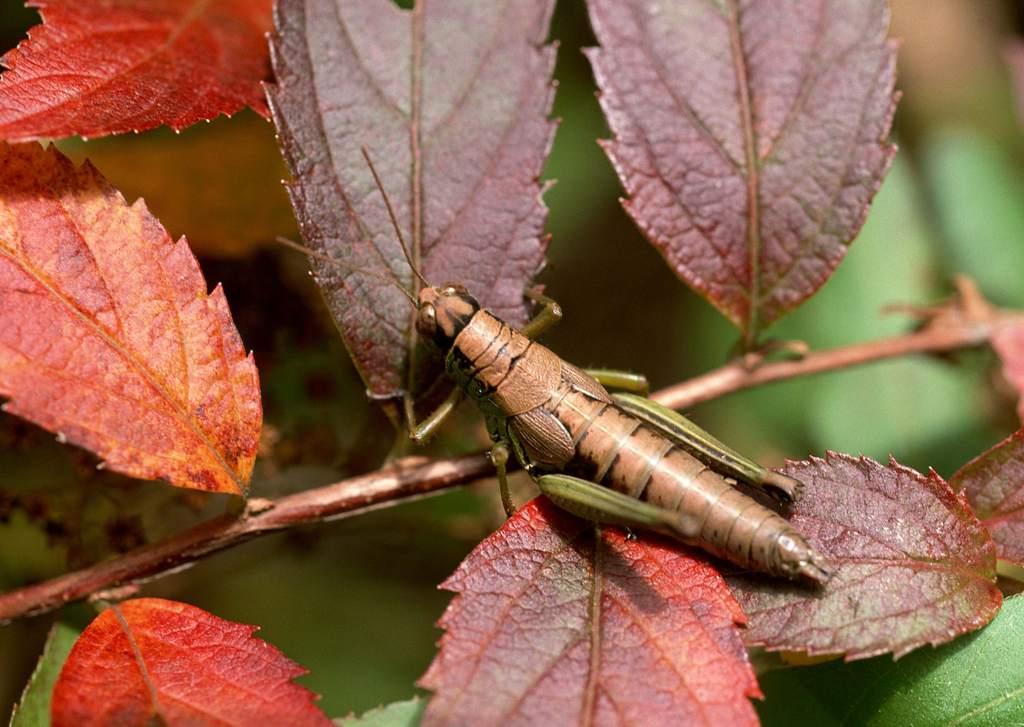 昆虫和鲜花蜻蜓花朵动物昆虫生物