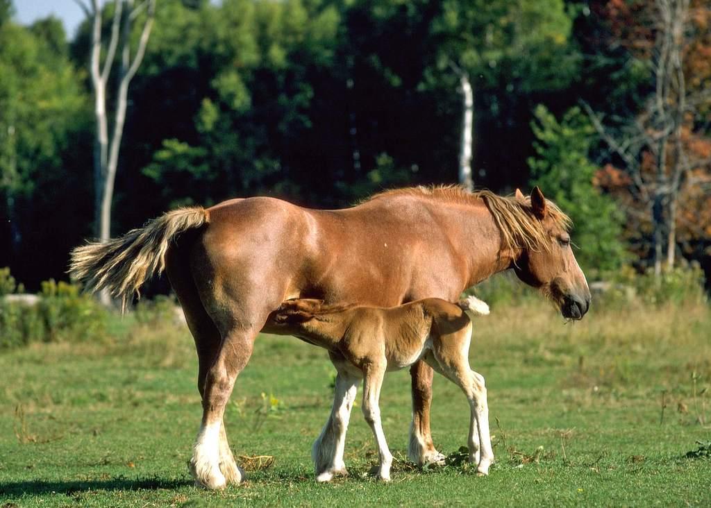 野外摄影一级保护动物世界摄影素材