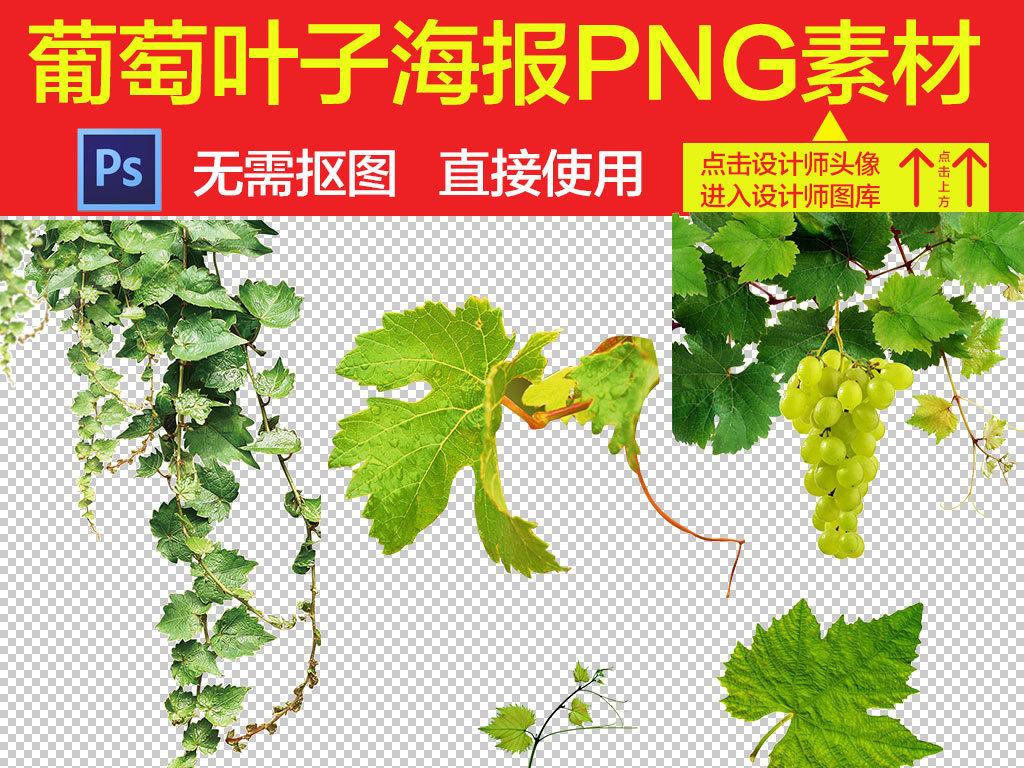 手绘叶子叶子素材叶子装饰绿色叶子葡萄叶子藤蔓绿叶