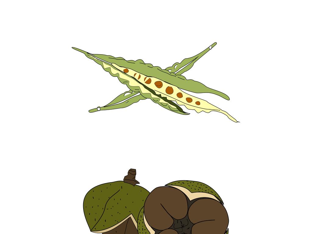 菜籽茶籽芝麻手绘图-高清元素产品图