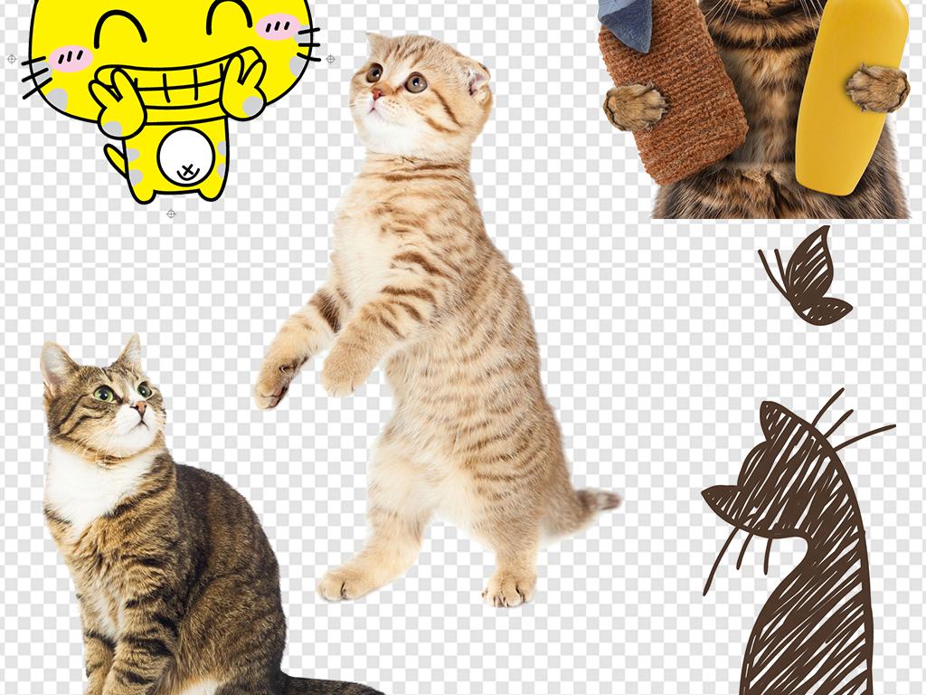 猫咪素材猫咪素材卡通小动物卡通动物素材动物卡通