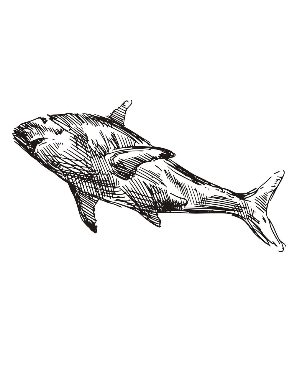 手绘鲨鱼简笔插画