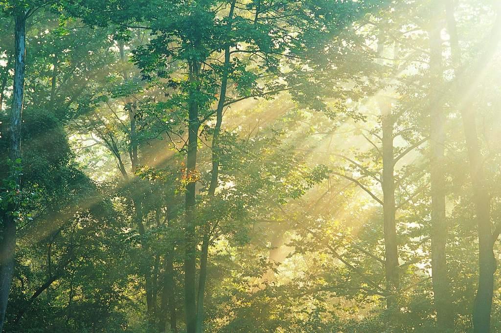 森林树木景色背景自然风光丛林景观