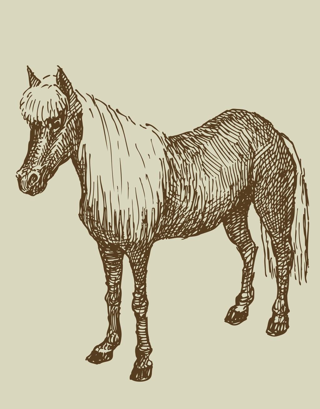 手绘骏马插画动物
