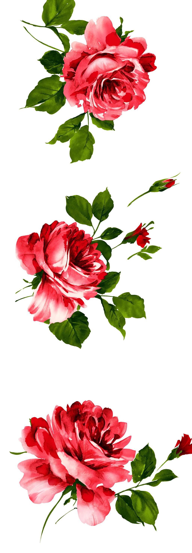 设计元素 自然素材 其他 > 手绘水彩玫瑰高清大图psd素材   图片编号