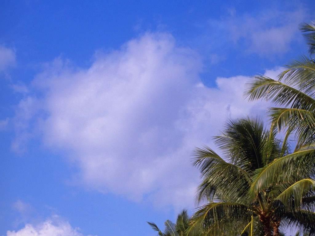 海岛植物生物花草植物热带植物椰树