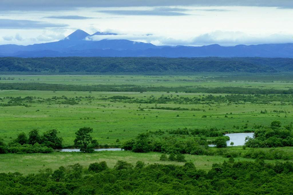 森林野外风景郊野景色远景美丽风景风景景色景色背景自然环境自然景色