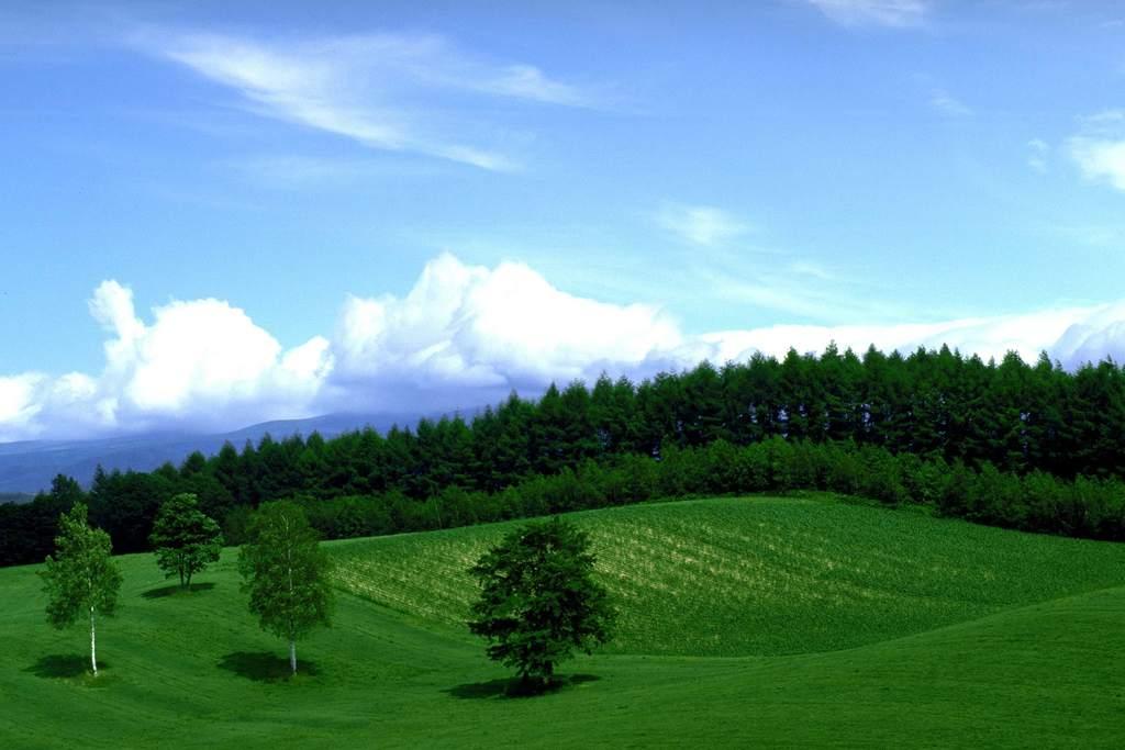树木树林蓝天草地草地田园风光图片田园风光高清图片田园风光图手绘