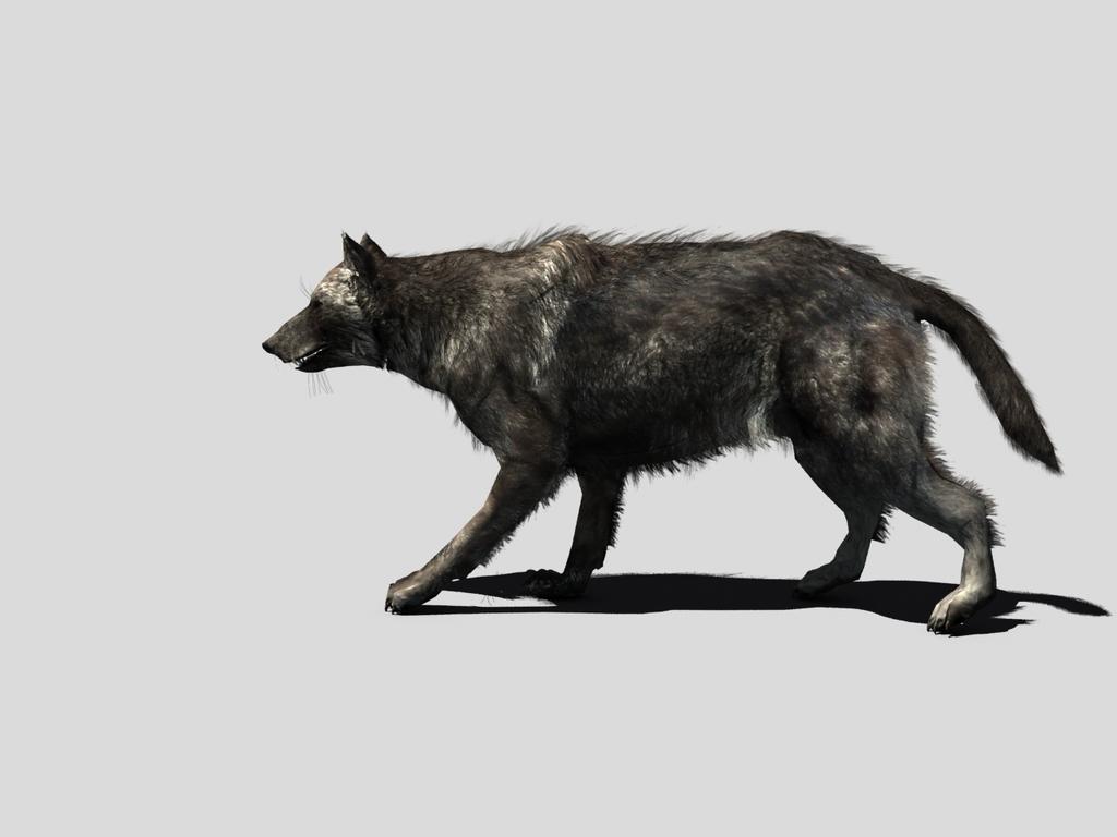 3d动物狼有骨骼动画可以编辑