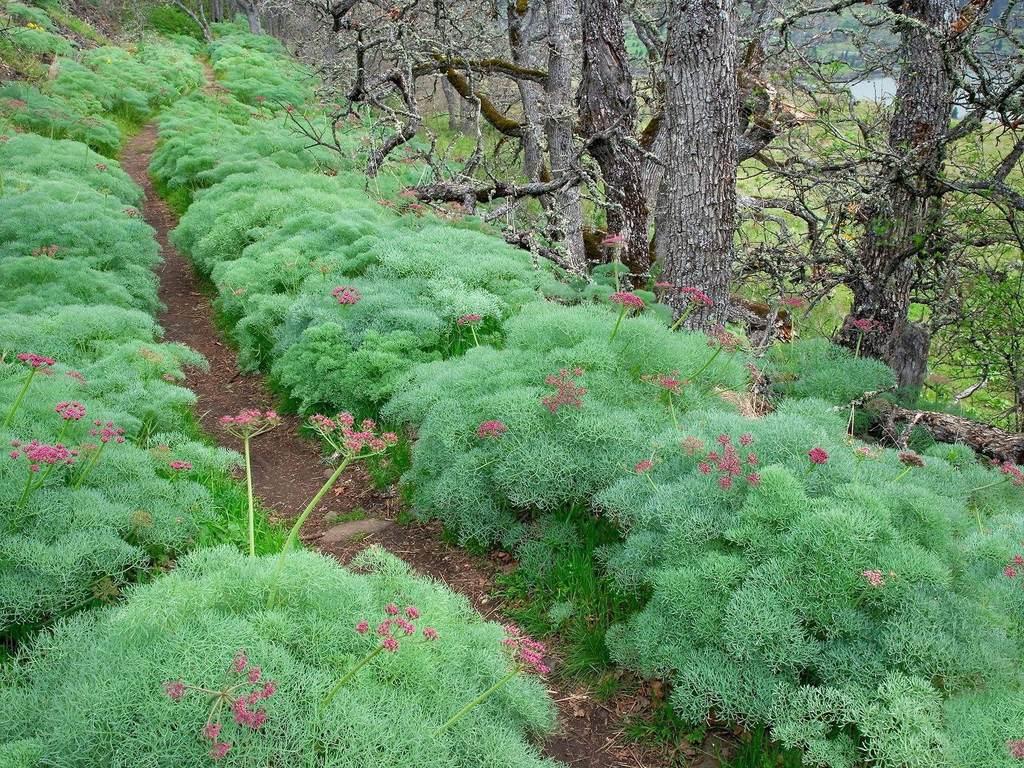 森林树木植物树林风景自然景观景色