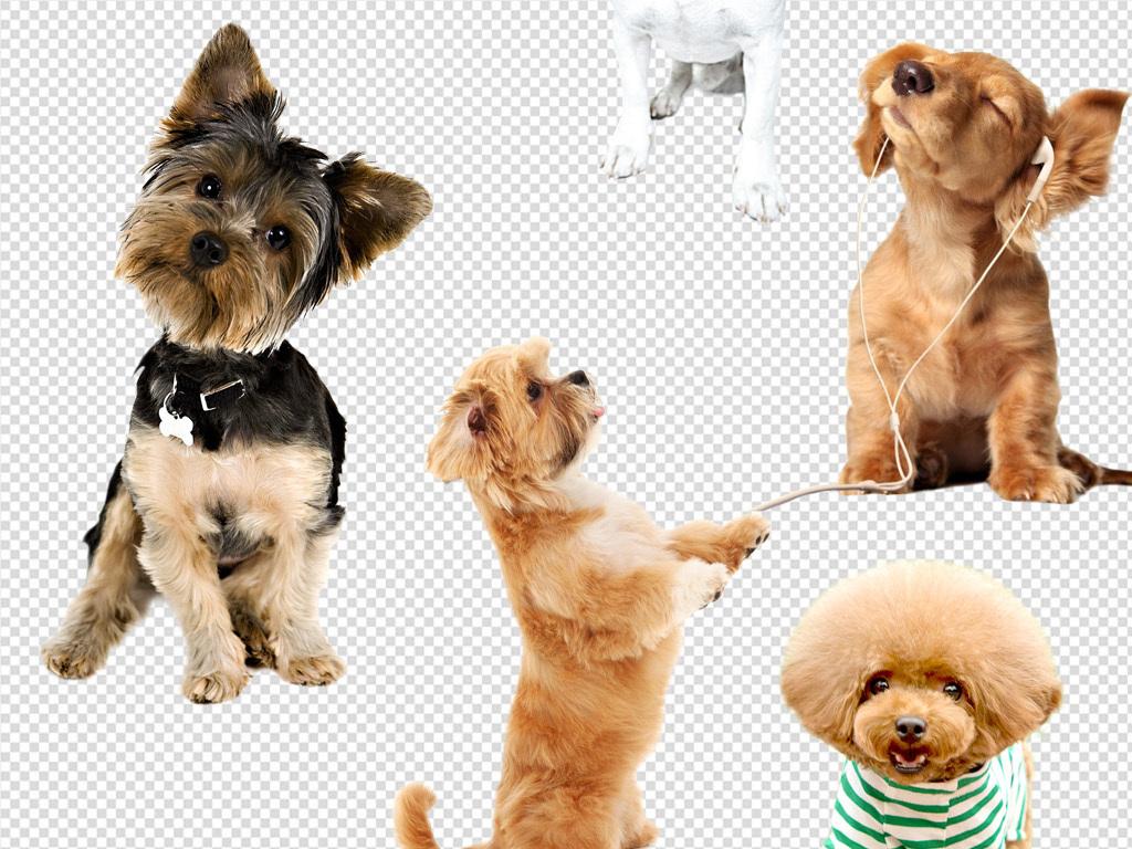 我图网提供精品流行 卡通多款宠物小狗造型设计PNG素材 下载,作品模板源文件可以编辑替换,设计作品简介: 卡通多款宠物小狗造型设计PNG素材 位图, CMYK格式高清大图, 使用软件为 Photoshop CS6(.png)