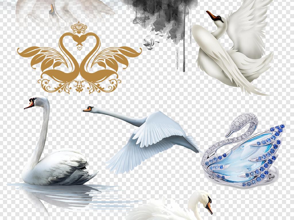 白天鹅黑天鹅图片素材