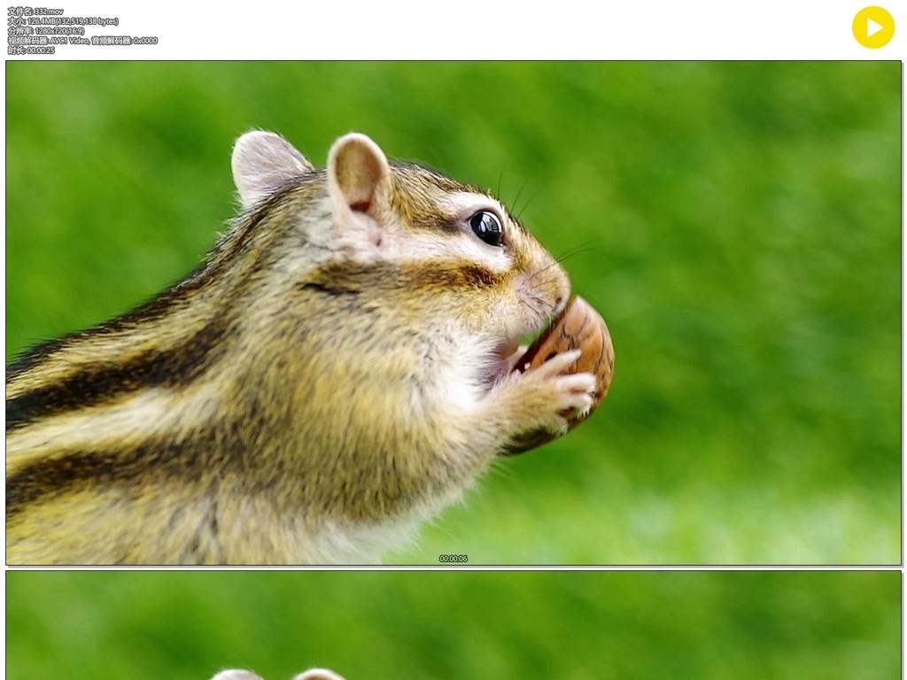 小仓鼠吃东西图片